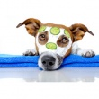 Manócska Kutyakozmetika