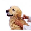 Budafoki Állatorvosi Rendelő