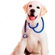 Mediterrán Állatorvosi Rendelő