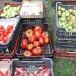 Élő Tisza Termelői Piac
